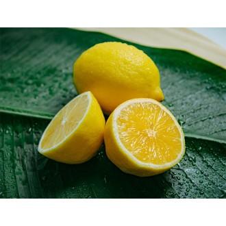미국산 레몬